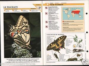 """Machaon Papillon Papilio machaon Grand porte-queue Swallowt Insect FICHE FRANCE - France - PORT GRATUIT A PARTIR DE 4 OBJETS BUY 4 ITEMS AND WORLDWIDE SHIPPING IS FREE EXCEPT USA, CANADA, AMERICA ONLY TRACKING MAIL FICHE TECHNIQUE, SPECIFICATION SHEET PAPIER GLACÉ, GLAZED PAPER RECTO-VERSO FORMAT 35 CM X 23,5 CM SIZE : 12.06"""" X 8.28""""  - France"""