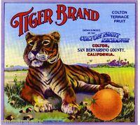 Colton San Bernardino County Tiger Orange Citrus Fruit Crate Label Art Print
