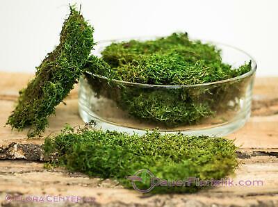 ca 250g apfelgrün mittelgrün Moos Lappenmoos Plattenmoos konserviert grün