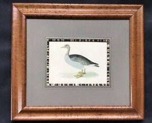 "15""x 13.5"" Birdseye Maple Frame - Grey-Lac Goose by Rev. Morris"