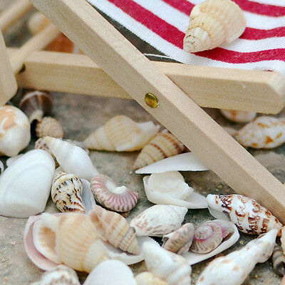 Approx 40pcs Beach Mixed SeaShells  dollhouse beach and Mini plants Decor DIY