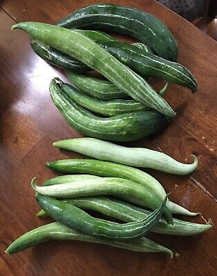 SNAKE GOURD Seeds Asian Trichosanthes Anguina Organic Vegetable seed Long Spikes