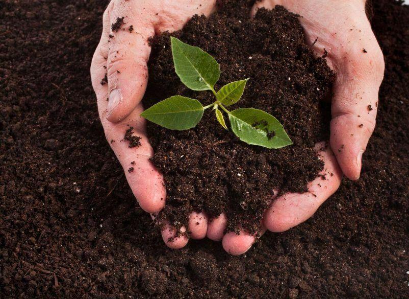 MULTIPURPOSE - COMPOST/SOIL - SUPER HIGH QUALITY Potting Seeding Cuttings 1-30L