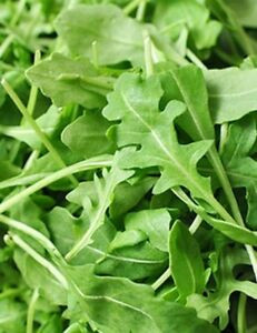 Roquette-Arugula-Seeds-Rocket-Colewort-NON-GMO-Variety-Sizes-FREE-SHIPPING