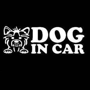 Adesivo-sticker-vinile-DOG-IN-CAR-auto-automobile-sicurezza-cane-macchina-SILVER