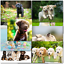 thumbnail 6 - Doodlecards Pack of 10 Standard Size Dog Lovers Birthday & Blank Cards
