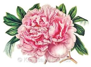 Gorgeous Pink Peony Quilt Fabric Block Multi Size FrEE ShiPPinG WoRld WiDE F2