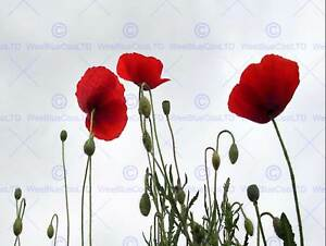 POPPIES-RED-GREEN-SKY-PHOTO-ART-PRINT-POSTER-PICTURE-BMP1124B