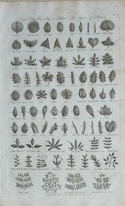 1789-DATED-PRINT-SIMPLE-LEAVES-LINNEUS-BOTANY-OVAL-JAGGED-KIDNEY-ARROW-FOOT