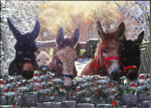 Charity-Christmas-Card-Air-Ambulance-Service-DONKEYS-IN-FIELD-Envelopes-10-Pack