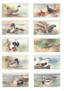 1927-Game-Birds-And-Wild-Fowl-Complete-Players-Tobacco-Card-Set-50-cards-ducks