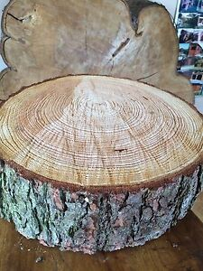 tree slice wedding cake stand uk 16 quot 40cm rustic log slice x 4 quot thick wooden wedding 21254