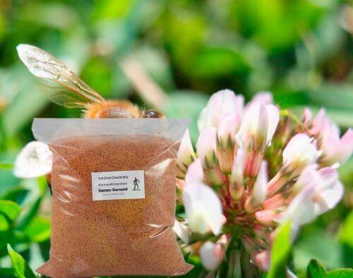 Trèfle alexandrinerklee Production d/'engrais vert frais semences 1 kg pour environ 250 mâ²