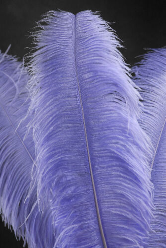"3 LAVENDER Ostrich FEATHERS 18-23/"" Full Wing PLUMES; Bridal//Wedding//Centerpiece"