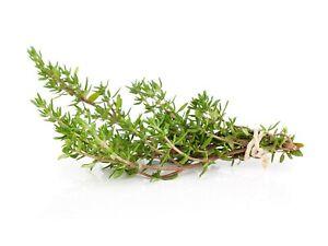 250 Graines de Thym - plante aromatique médicinale- jardin méthode ...