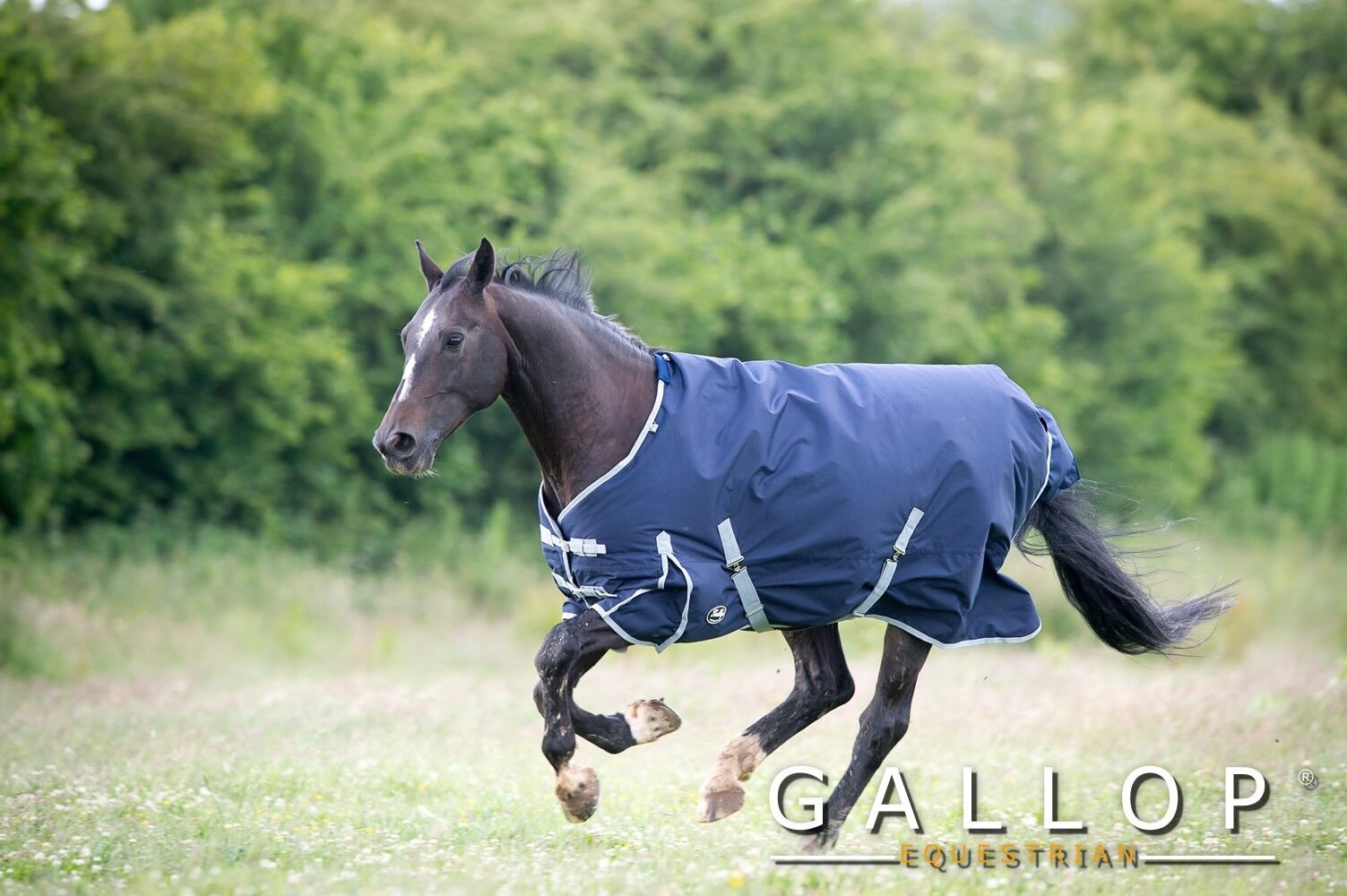 Gallop Trojan 350g Heavyweight Standard Turnout Rug - all sizes available