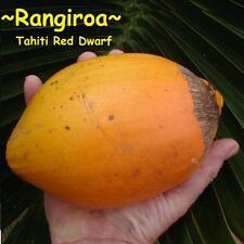~RED TAHITI~ Dwarf COCONUT ~RANGIROA~ Cocos nucifera var. Haari Papua RARE SEED