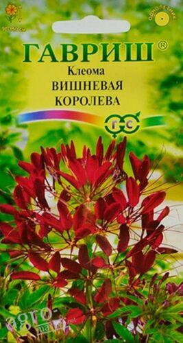 "/""CHERRY QUEEN/"" SPIDER FLOWER SEEDS RUSSIAN CLEOME"