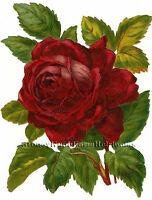 Red Rose Vintage Flowers Cross Stitch Pattern
