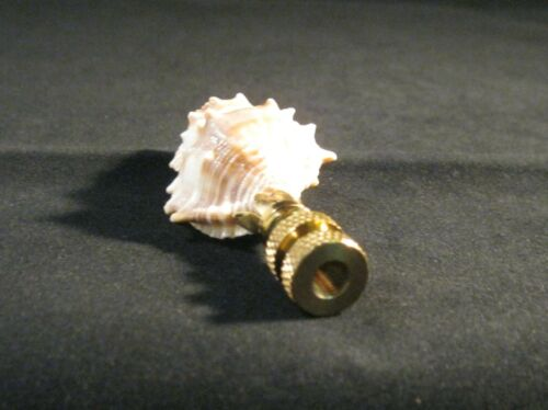 LAMP FINIAL-SMALL RIBBED CONCH SHELL LAMP FINIAL WITH POLISHED BRASS BASE