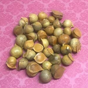 Garlic-male-bag-of-50-units-Ajo-Macho-Wicca-Spell-witchcraft
