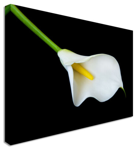 Canvas Wall Art Pictures For Home Interiors Swinging Calla Lillies