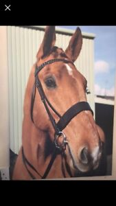 Irish-Sports-Horse-Large-Canvas-Picture-Art-Work-Studio-Equestrian-Livery-Stable