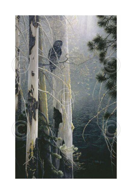 ART PRINT - Silent Sentinel (Owl) by Stephen Lyman Bird Wildlife Poster 17x26