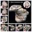 Natural-Polished-Microsection-Petrified-Wood-Quartz-Crystal-Gift-Healing-1PC miniature 1