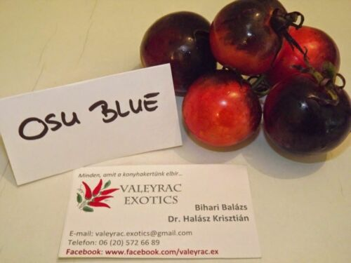 BLUE and RED! 5 OSU Blue Tomato seeds