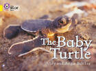 Collins Big Cat: The Baby Turtle: Band 03/Yellow by Angie Belcher, Andy Belcher (Paperback, 2007)