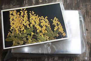 H3-100-Ansichtskarten-Postkarten-Folien-Huellen-PREMIUM-HART-149x101-fuer-alte-AK