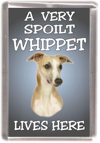 """Whippet Dog Fridge Magnet /""""A VERY SPOILT WHIPPET LIVES HERE/"""" by Starprint"""