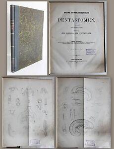 Leuckart-construccion-y-desarrollo-de-historia-de-la-pentastomen-1860-biologia-insectos