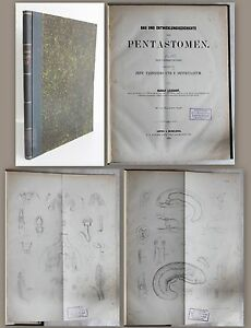 Leuckart-construction-et-Histoire-de-developpement-de-Pentastomen-1860