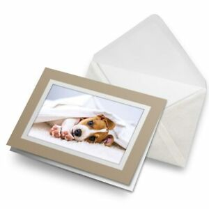 Greetings-Card-Biege-Jack-Russell-Terrier-Dog-Puppy-Animals-8286