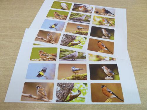 British Garden Birds Envelope Seal Labels Wildlife Stickers 5030-BIRDS-2-24