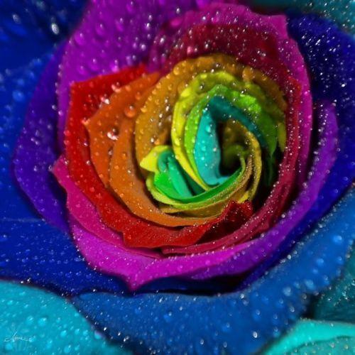"""/""""35 Semi di Rose RARISSIME Petali Colorati.."""
