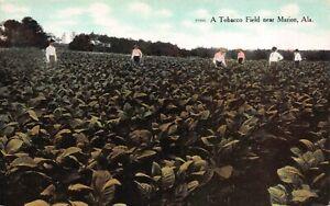 Postcard-A-Tobacco-Field-near-Marion-Alabama-122046