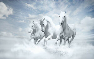 Framed Print White Horses Running Through The Water Picture
