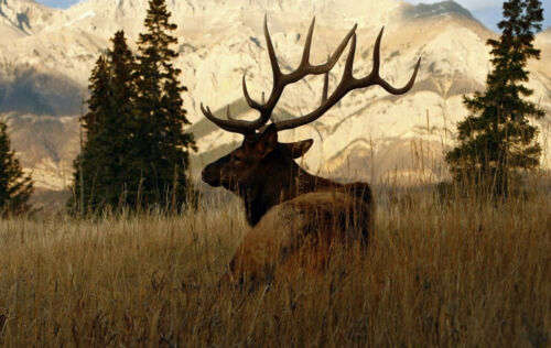 Picture Poster Art Framed Print Stag Walking through the Alaskan Wilderness