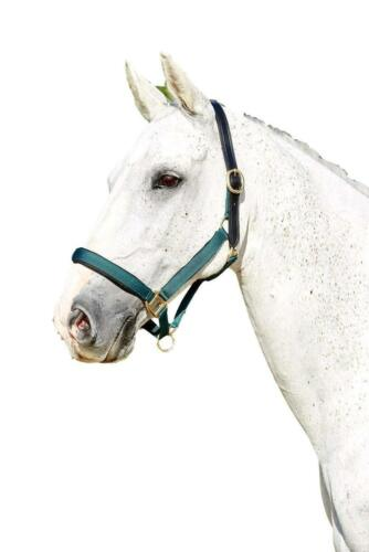 Kincade Deluxe Webbed Halter with Leather Crown and Adjustable Nose