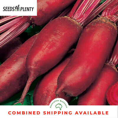 Beet Ruby Queen 1500 Seeds Heirloom Garden Vegetable Beta Vulgaris