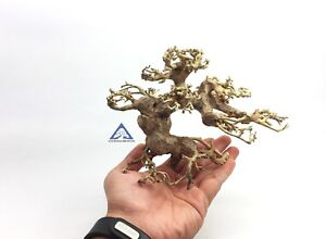 Details About Aquarium Bonsai Driftwood Moss Small Tree Shrimp Nano Planted Tank Bulk E