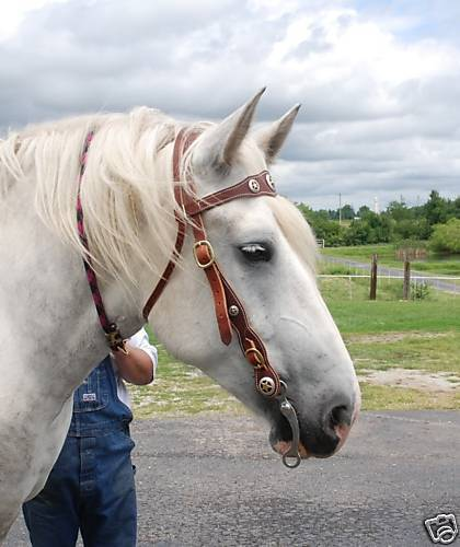 49B Ultimate draft horse braun brille, bit, conchos brand new Amish made