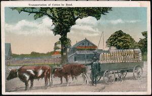BLACK AMERICANA Oxen Transportation of Cotton Vintage Postcard Old Ox Wagon
