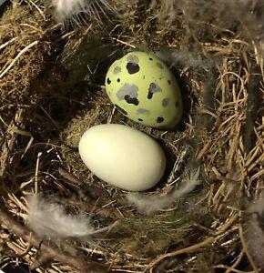 Replica Bird Eggs (Garganey and Common Tern)