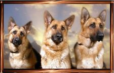 German Shepherd Dog/Alsatian Blank Card 7 by Starprint