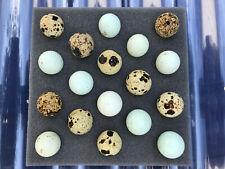 18 Celadon Blue Assorted Coturnix Quail Eggs Free Shipping