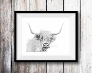 Details about HIGHLAND COW ART PRINT Pencil Drawing Wildlife Animal Sketch  A4 Wall Art Signed